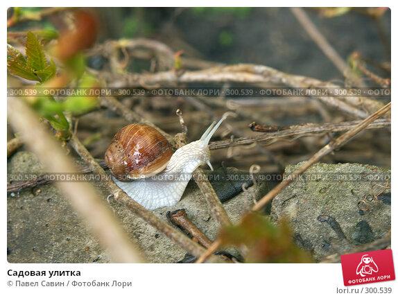 Купить «Садовая улитка», фото № 300539, снято 29 апреля 2008 г. (c) Павел Савин / Фотобанк Лори
