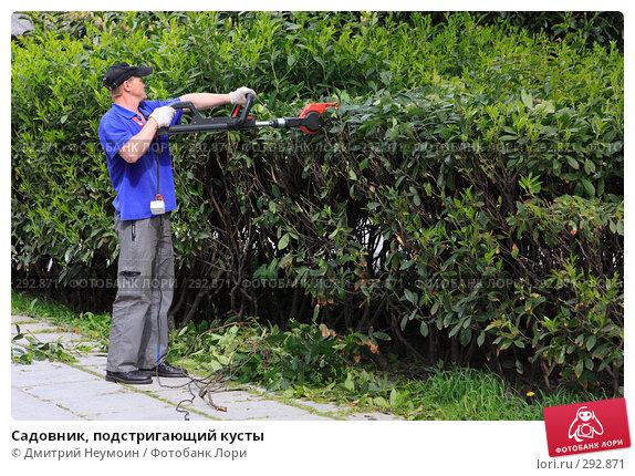 Садовник, подстригающий кусты, эксклюзивное фото № 292871, снято 24 апреля 2008 г. (c) Дмитрий Нейман / Фотобанк Лори