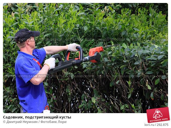 Садовник, подстригающий кусты, эксклюзивное фото № 292875, снято 24 апреля 2008 г. (c) Дмитрий Неумоин / Фотобанк Лори