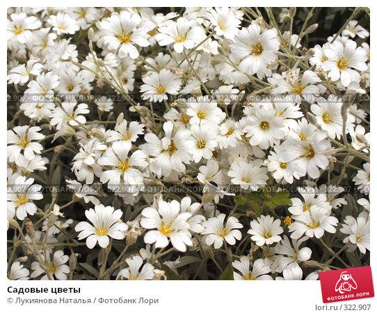 Садовые цветы, фото № 322907, снято 10 июня 2008 г. (c) Лукиянова Наталья / Фотобанк Лори