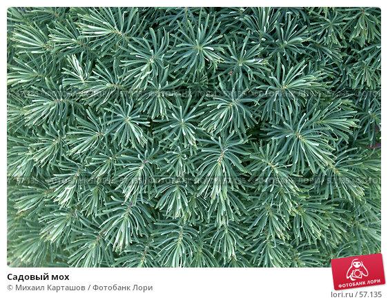 Садовый мох, эксклюзивное фото № 57135, снято 11 июня 2007 г. (c) Михаил Карташов / Фотобанк Лори