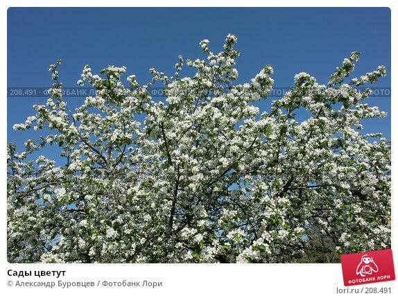 Сады цветут, фото № 208491, снято 20 мая 2007 г. (c) Александр Буровцев / Фотобанк Лори