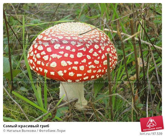Самый красивый гриб, эксклюзивное фото № 97539, снято 30 сентября 2007 г. (c) Наталья Волкова / Фотобанк Лори