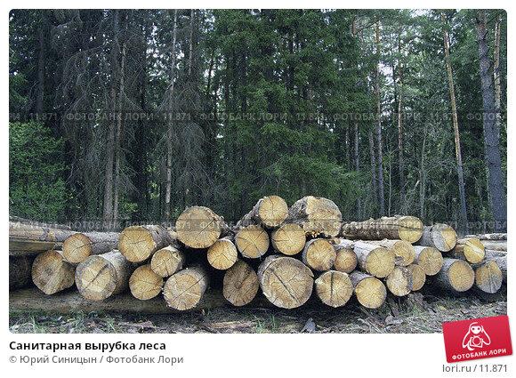 Санитарная вырубка леса, фото № 11871, снято 24 апреля 2017 г. (c) Юрий Синицын / Фотобанк Лори