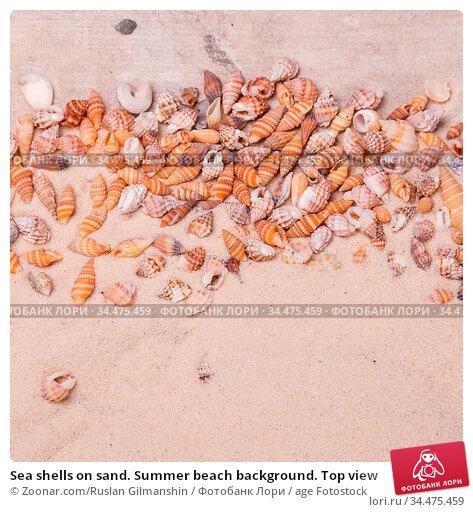 Sea shells on sand. Summer beach background. Top view. Стоковое фото, фотограф Zoonar.com/Ruslan Gilmanshin / age Fotostock / Фотобанк Лори