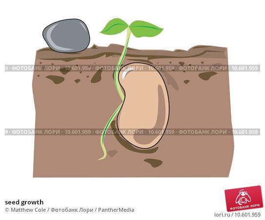 seed growth. Стоковая иллюстрация, иллюстратор Matthew Cole / PantherMedia / Фотобанк Лори