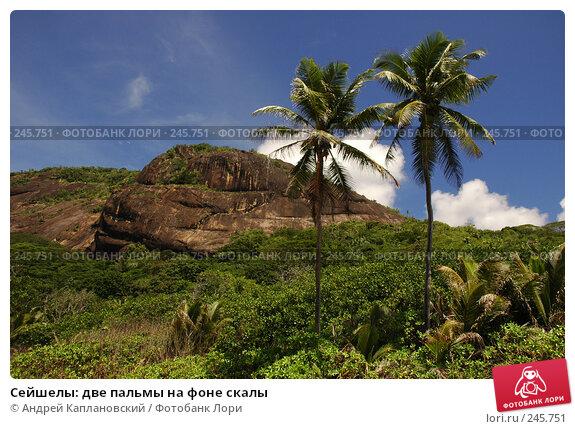 Купить «Сейшелы: две пальмы на фоне скалы», фото № 245751, снято 29 августа 2007 г. (c) Андрей Каплановский / Фотобанк Лори
