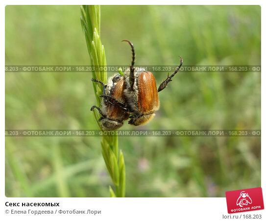 Купить «Секс насекомых», фото № 168203, снято 4 июня 2006 г. (c) Елена Гордеева / Фотобанк Лори