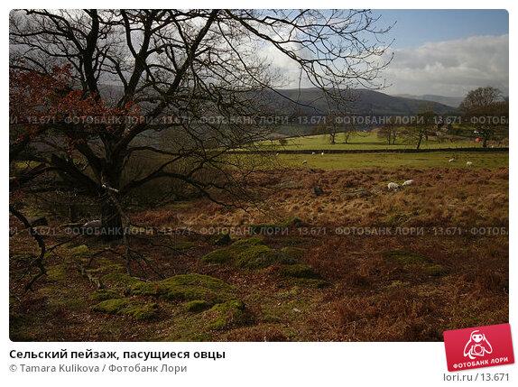 Сельский пейзаж, пасущиеся овцы, фото № 13671, снято 17 февраля 2006 г. (c) Tamara Kulikova / Фотобанк Лори