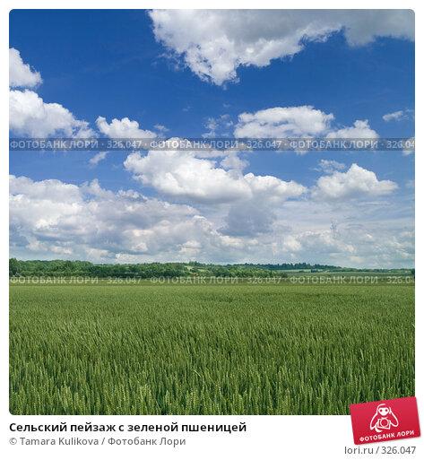 Купить «Сельский пейзаж с зеленой пшеницей», фото № 326047, снято 17 июня 2008 г. (c) Tamara Kulikova / Фотобанк Лори