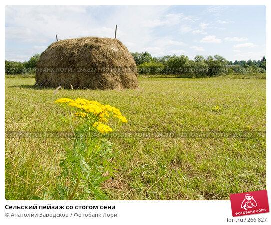 Сельский пейзаж со стогом сена, фото № 266827, снято 3 августа 2006 г. (c) Анатолий Заводсков / Фотобанк Лори