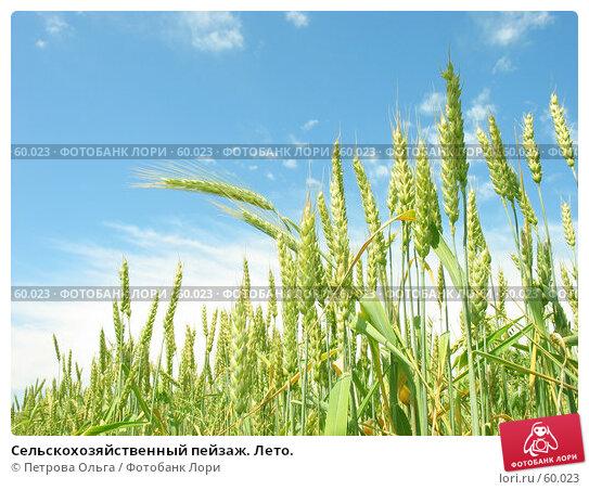 Купить «Сельскохозяйственный пейзаж. Лето.», фото № 60023, снято 19 июня 2007 г. (c) Петрова Ольга / Фотобанк Лори