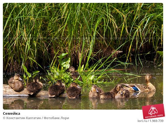 Семейка. Стоковое фото, фотограф Константин Калгатин / Фотобанк Лори