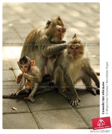 Купить «Семейство обезьян», фото № 225807, снято 24 февраля 2008 г. (c) Морозова Татьяна / Фотобанк Лори