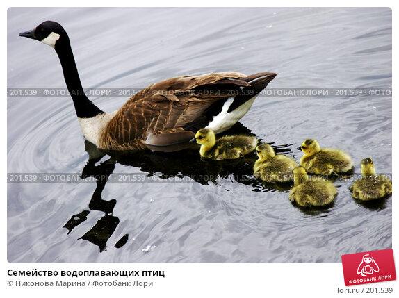Семейство водоплавающих птиц, фото № 201539, снято 31 мая 2006 г. (c) Никонова Марина / Фотобанк Лори