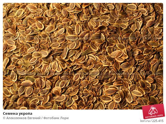 Купить «Семена укропа», фото № 225415, снято 3 февраля 2008 г. (c) Алексеенков Евгений / Фотобанк Лори