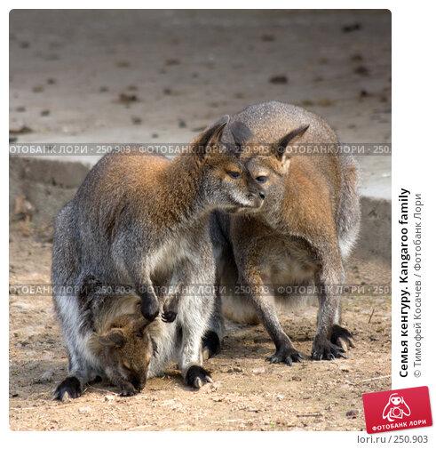 Семья кенгуру. Kangaroo family, фото № 250903, снято 12 апреля 2008 г. (c) Тимофей Косачев / Фотобанк Лори