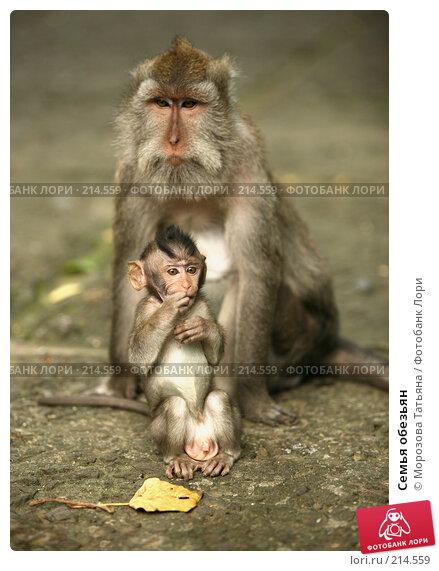 Семья обезьян, фото № 214559, снято 24 февраля 2008 г. (c) Морозова Татьяна / Фотобанк Лори