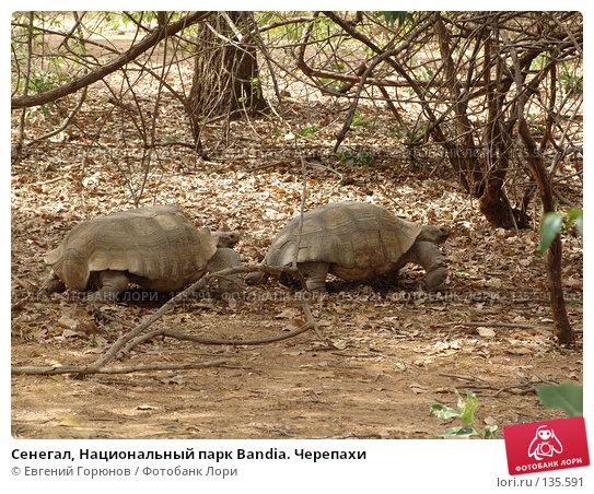 Сенегал, Национальный парк Bandia. Черепахи, фото № 135591, снято 1 декабря 2007 г. (c) Евгений Горюнов / Фотобанк Лори