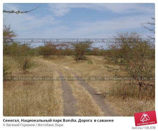 Сенегал, Национальный парк Bandia. Дорога  в саванне, фото № 135579, снято 1 декабря 2007 г. (c) Евгений Горюнов / Фотобанк Лори