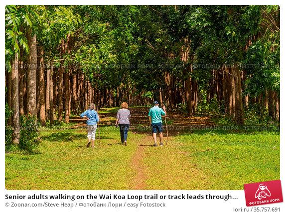 Senior adults walking on the Wai Koa Loop trail or track leads through... Стоковое фото, фотограф Zoonar.com/Steve Heap / easy Fotostock / Фотобанк Лори