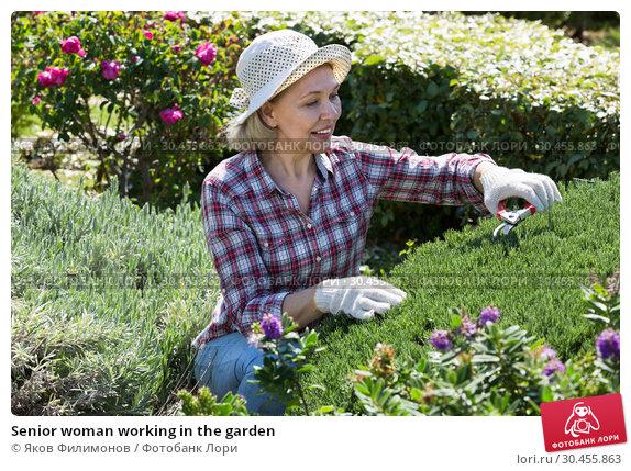 Senior woman working in the garden. Стоковое фото, фотограф Яков Филимонов / Фотобанк Лори