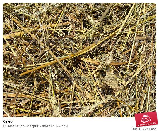 Сено, фото № 267083, снято 27 апреля 2008 г. (c) Емельянов Валерий / Фотобанк Лори
