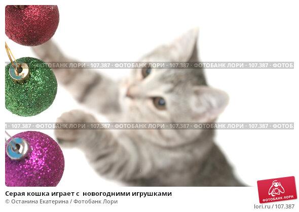 Серая кошка играет с  новогодними игрушками, фото № 107387, снято 19 октября 2007 г. (c) Останина Екатерина / Фотобанк Лори