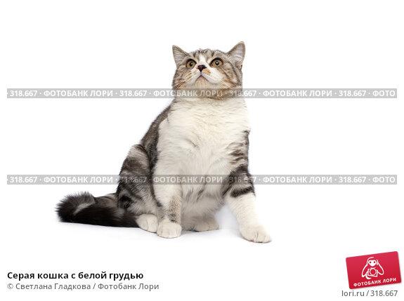 Серая кошка с белой грудью, фото № 318667, снято 12 апреля 2008 г. (c) Cветлана Гладкова / Фотобанк Лори