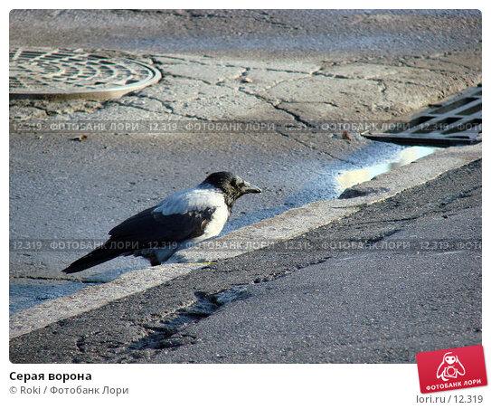 Серая ворона, фото № 12319, снято 24 сентября 2006 г. (c) Roki / Фотобанк Лори
