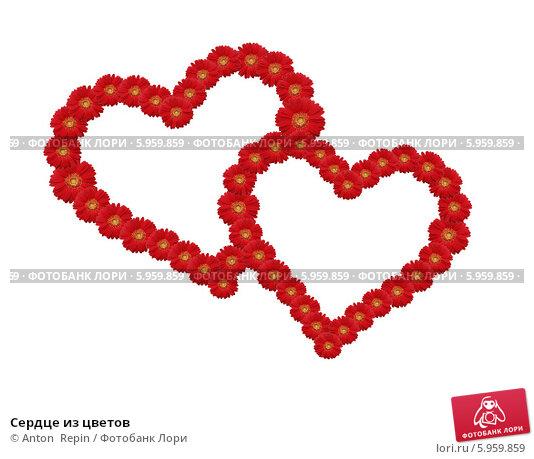 Купить «Сердце из цветов», фото № 5959859, снято 23 апреля 2019 г. (c) Anton  Repin / Фотобанк Лори