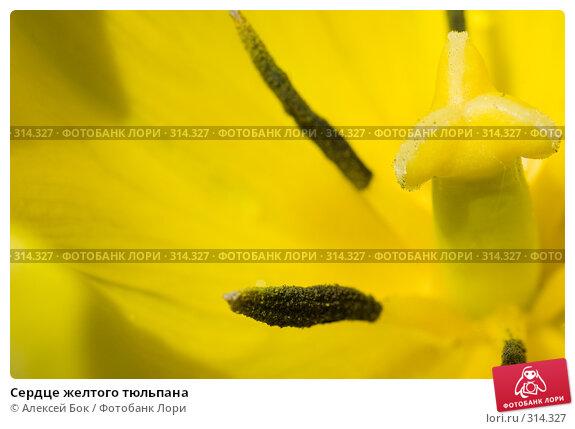 Купить «Сердце желтого тюльпана», фото № 314327, снято 18 мая 2008 г. (c) Алексей Бок / Фотобанк Лори