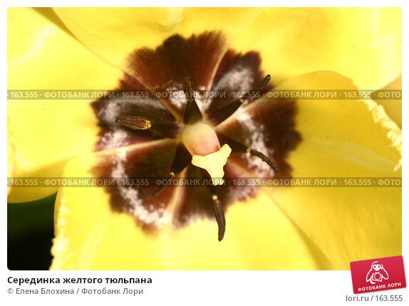 Купить «Серединка желтого тюльпана», фото № 163555, снято 9 мая 2007 г. (c) Елена Блохина / Фотобанк Лори