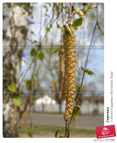 Сережка, фото № 177599, снято 26 апреля 2006 г. (c) Елена Гордеева / Фотобанк Лори