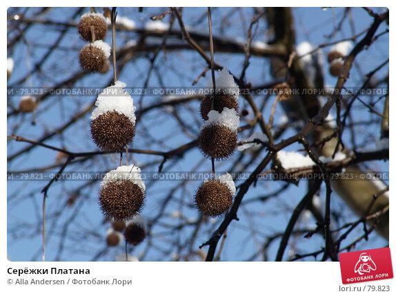 Серёжки Платана, фото № 79823, снято 4 марта 2006 г. (c) Alla Andersen / Фотобанк Лори