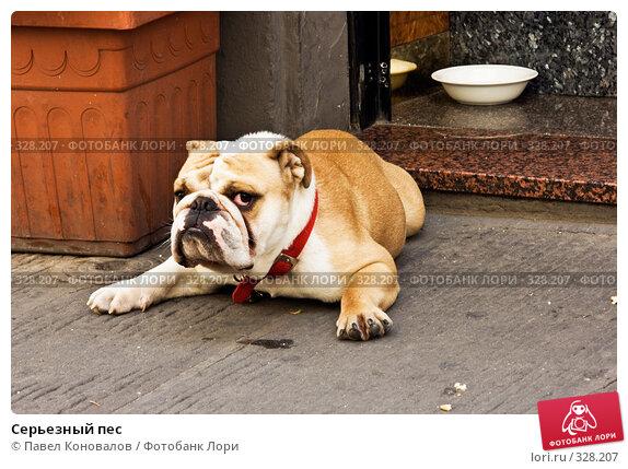 Серьезный пес, фото № 328207, снято 27 июня 2007 г. (c) Павел Коновалов / Фотобанк Лори