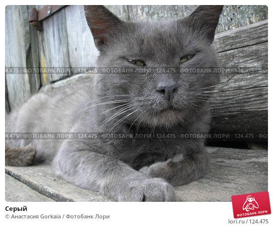 Купить «Серый», фото № 124475, снято 26 августа 2006 г. (c) Анастасия Gorkaia / Фотобанк Лори