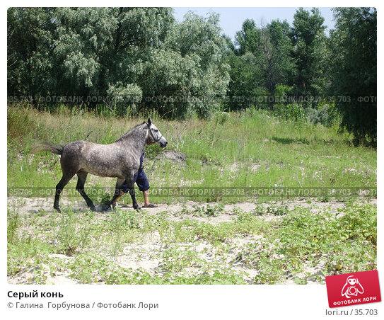 Серый конь, фото № 35703, снято 23 июля 2005 г. (c) Галина  Горбунова / Фотобанк Лори