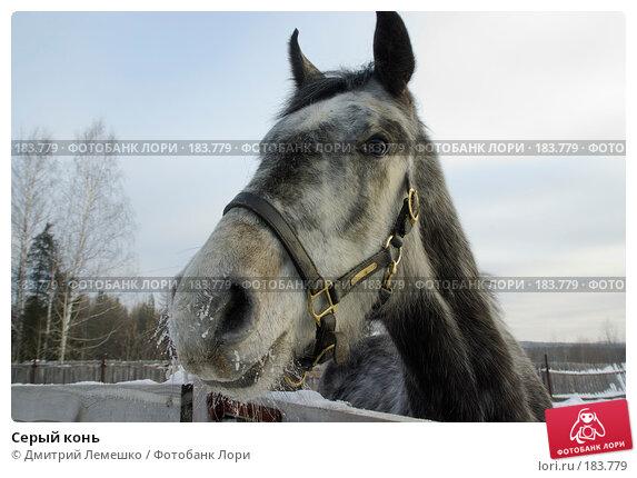 Купить «Серый конь», фото № 183779, снято 19 января 2008 г. (c) Дмитрий Лемешко / Фотобанк Лори