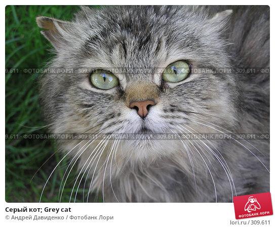Серый кот; Grey cat, фото № 309611, снято 23 мая 2008 г. (c) Андрей Давиденко / Фотобанк Лори