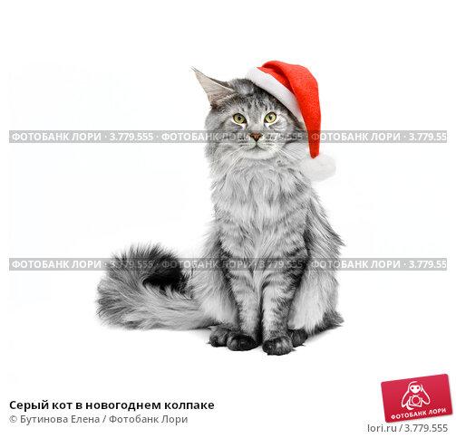 Серый кот в новогоднем колпаке. Стоковое фото, фотограф Бутинова Елена / Фотобанк Лори