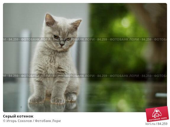 Серый котенок, фото № 84259, снято 28 мая 2017 г. (c) Игорь Соколов / Фотобанк Лори