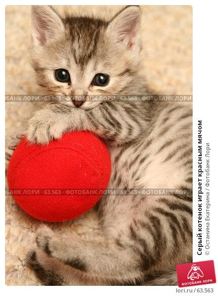 Серый котенок играет красным мячом, фото № 63563, снято 4 июля 2007 г. (c) Останина Екатерина / Фотобанк Лори