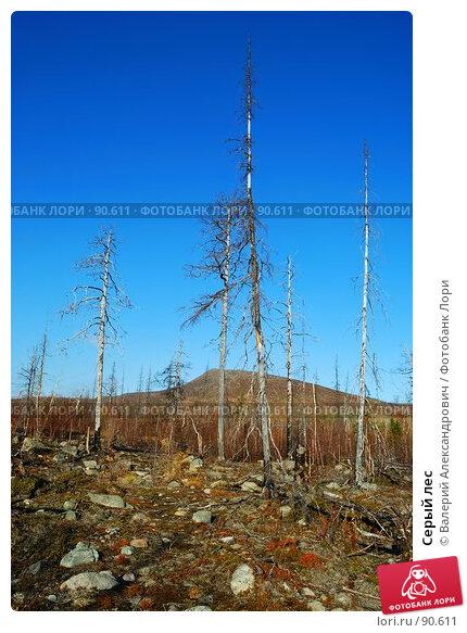 Серый лес, фото № 90611, снято 21 февраля 2017 г. (c) Валерий Александрович / Фотобанк Лори