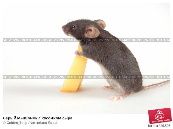 Серый мышонок с кусочком сыра, фото № 26595, снято 18 марта 2007 г. (c) Golden_Tulip / Фотобанк Лори