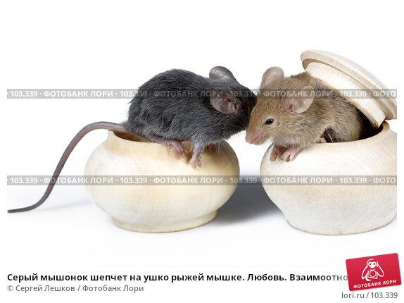 Купить «Серый мышонок шепчет на ушко рыжей мышке. Любовь. Взаимоотношения. Дружба.», фото № 103339, снято 25 марта 2018 г. (c) Сергей Лешков / Фотобанк Лори