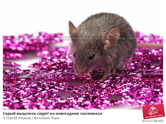 Купить «Серый мышонок сидит на новогодних снежинках», фото № 88663, снято 23 сентября 2007 г. (c) Сергей Лешков / Фотобанк Лори