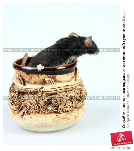 Серый мышонок выглядывает из глиняной сувенирной кружки, боком, фото № 38983, снято 18 марта 2007 г. (c) Сергей Лешков / Фотобанк Лори