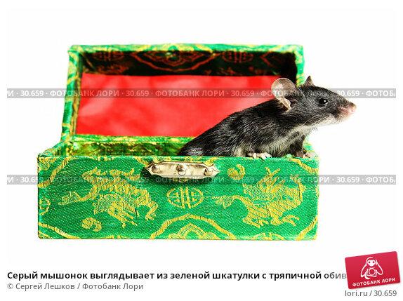 Серый мышонок выглядывает из зеленой шкатулки с тряпичной обивкой, фото № 30659, снято 18 марта 2007 г. (c) Сергей Лешков / Фотобанк Лори