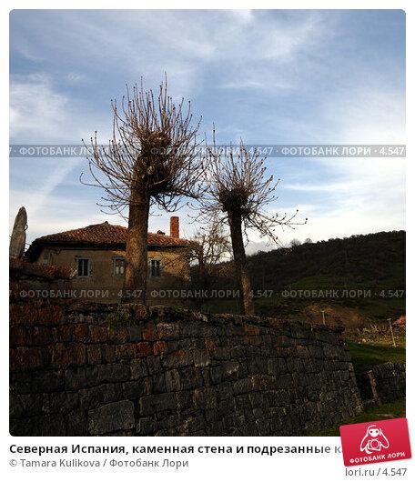 Северная Испания, каменная стена и подрезанные каштаны, фото № 4547, снято 8 апреля 2006 г. (c) Tamara Kulikova / Фотобанк Лори
